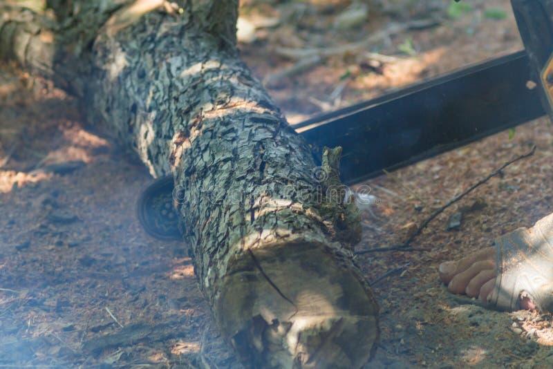 Πριονίζοντας ξύλο με ένα αλυσιδοπρίονο στοκ φωτογραφία με δικαίωμα ελεύθερης χρήσης