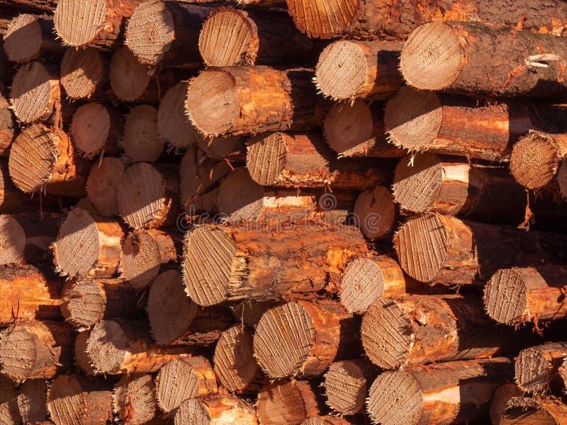 Πριονισμένο υπόβαθρο κούτσουρων δασονομίας ξυλείας στοκ φωτογραφία