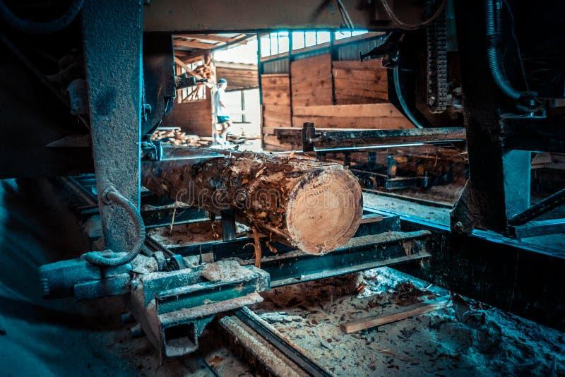 πριονιστήριο Η διαδικασία στη μηχανή συνδέεται τα πριόνια μηχανών πριονιστηρίων ο κορμός δέντρων στοκ εικόνα με δικαίωμα ελεύθερης χρήσης