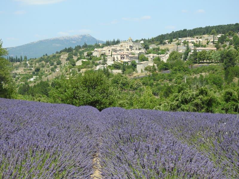 Προβηγκία που ζει με το άρωμα Lavender στοκ εικόνες