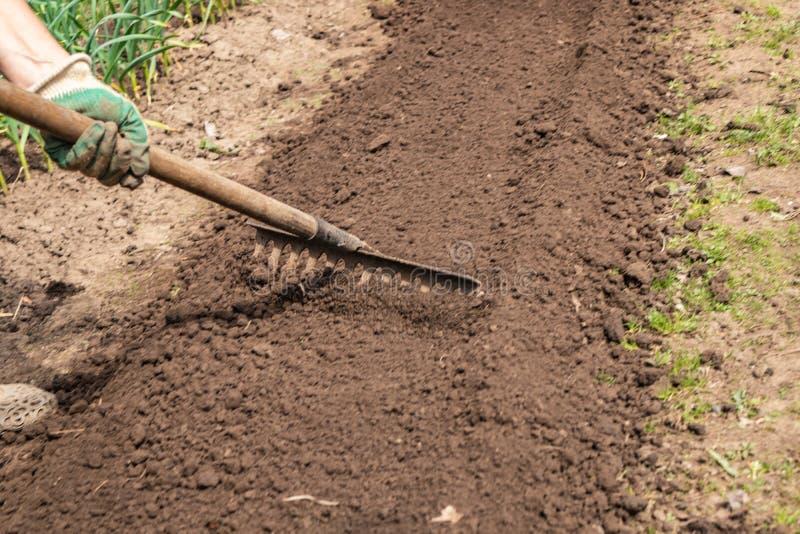 Προετοιμασία των κρεβατιών για τη φύτευση μετά από το χειμώνα μαζεψτε με τη τσουγκράνα χαλαρωμένος και ισοπεδωμένος το έδαφος στα στοκ εικόνα