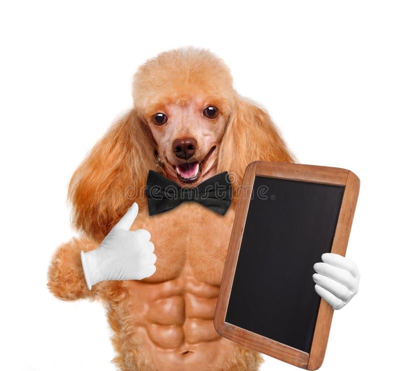 Προκλητικό σκυλί. Δημιουργικός. στοκ εικόνα