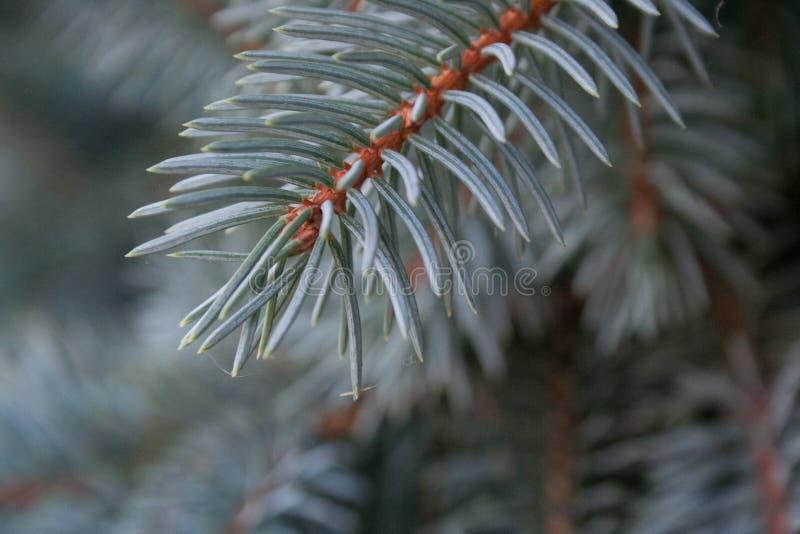Προοίμιο στα Χριστούγεννα στοκ φωτογραφίες