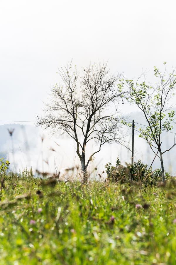 Προοπτική βατράχων του δέντρου μπροστά από το σύννεφο καπνού σε έναν πράσινο τομέα στην Κροατία στοκ φωτογραφίες