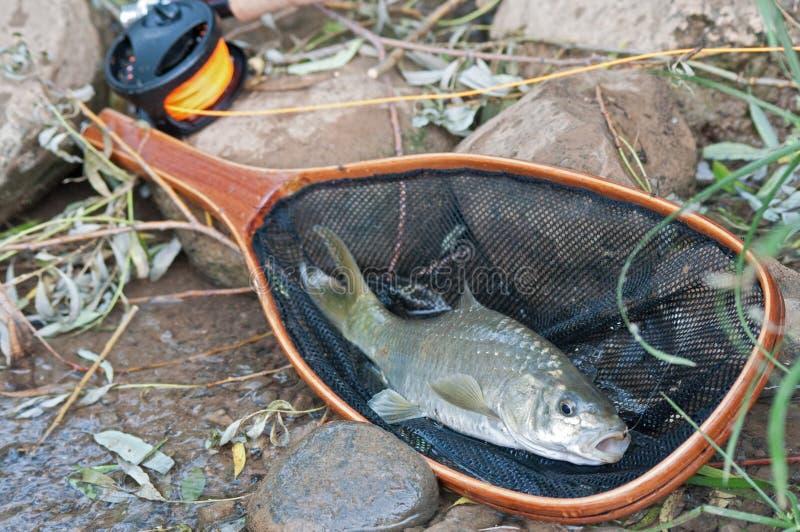 προσγείωση ψαριών καθαρή στοκ εικόνες