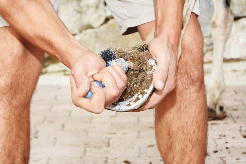 Προσοχή αλόγων στοκ φωτογραφίες