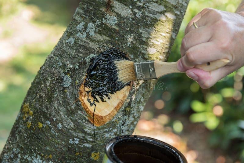 Προσοχή δέντρων με την ξύλινη πίσσα - κινηματογράφηση σε πρώτο πλάνο στοκ φωτογραφία με δικαίωμα ελεύθερης χρήσης