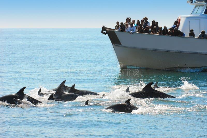 προσοχή δελφινιών στοκ εικόνα με δικαίωμα ελεύθερης χρήσης