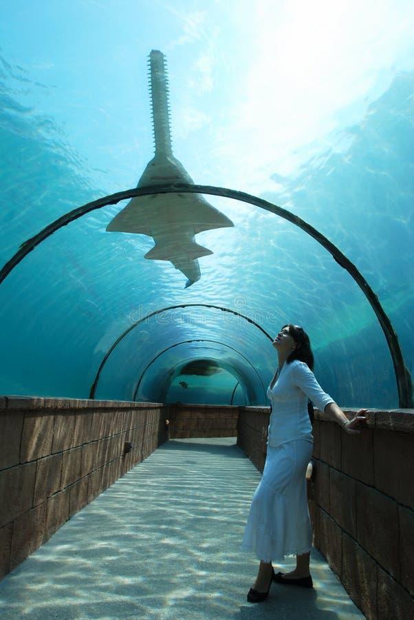 προσοχή καρχαριών στοκ εικόνες με δικαίωμα ελεύθερης χρήσης