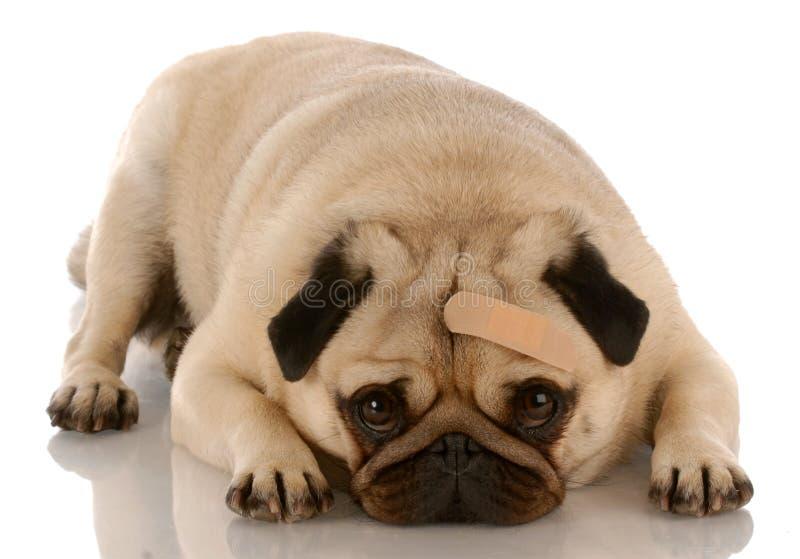 προσοχή κτηνιατρική στοκ φωτογραφία με δικαίωμα ελεύθερης χρήσης