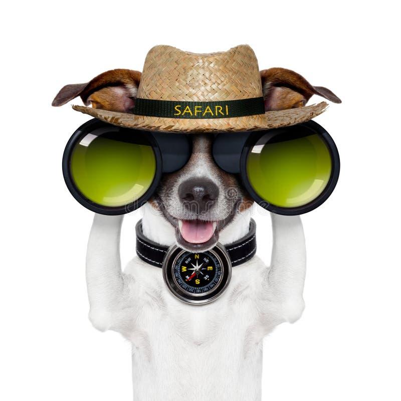 Προσοχή σκυλιών πυξίδων σαφάρι διοπτρών στοκ φωτογραφία