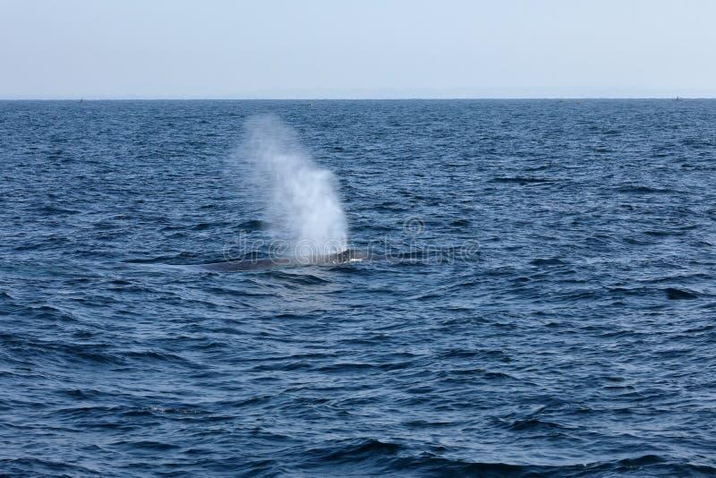 Προσοχή φαλαινών στη Σρι Λάνκα στοκ εικόνες
