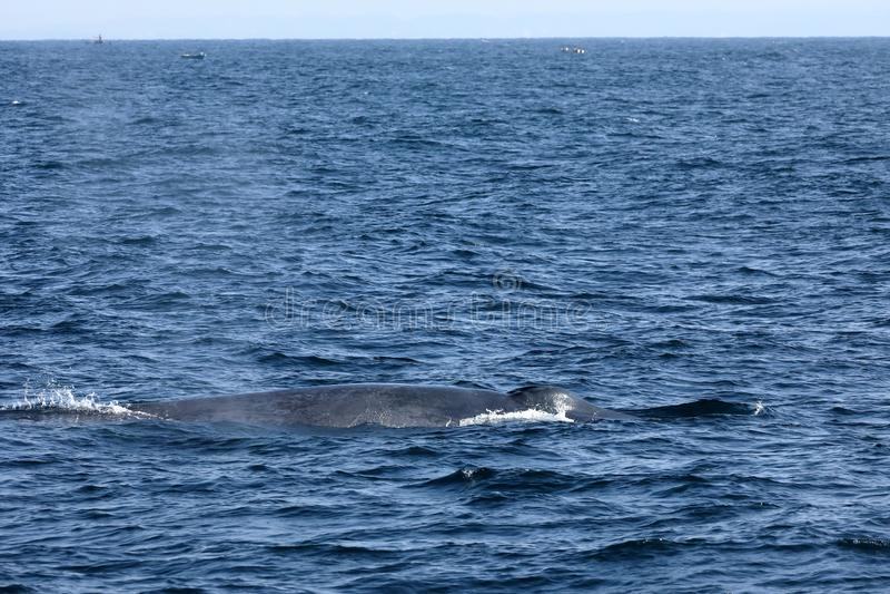 Προσοχή φαλαινών στη Σρι Λάνκα στοκ φωτογραφία με δικαίωμα ελεύθερης χρήσης