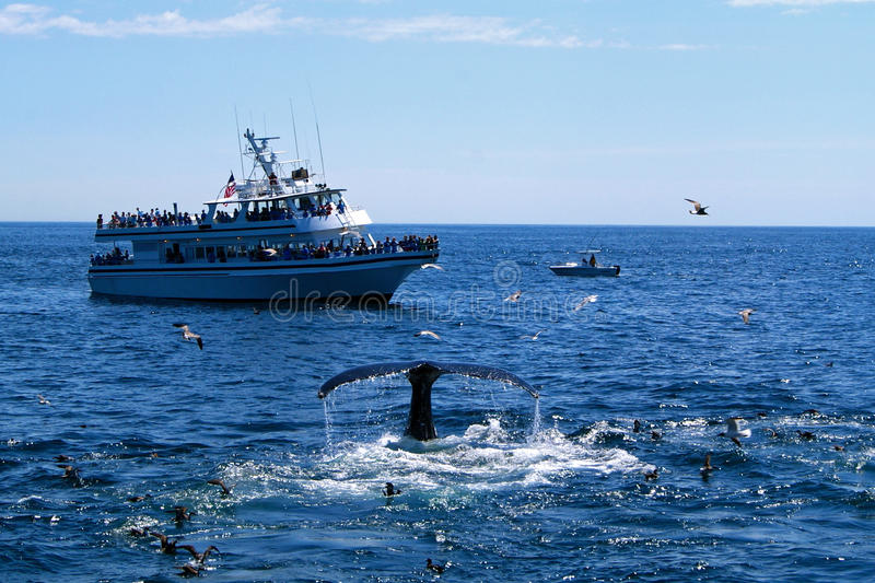 Προσοχή φαλαινών στοκ φωτογραφία με δικαίωμα ελεύθερης χρήσης