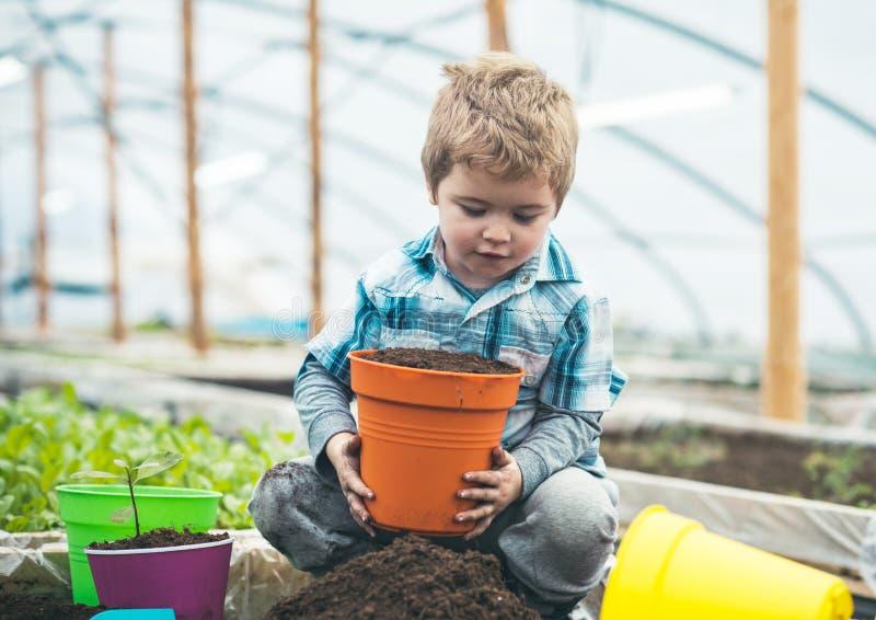 Προστασία φύσης Έννοια προστασίας φύσης μικρή προστασία φύσης αγάπης παιδιών προστασία φύσης με τη σπορά και στοκ εικόνες