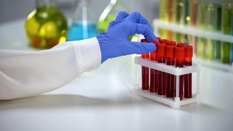 Προστατευτικά γάντια βιοχημικών που παίρνουν το σωλήνα δειγμάτων αίματος, εξέταση υγείας, ανάλυση στοκ εικόνα