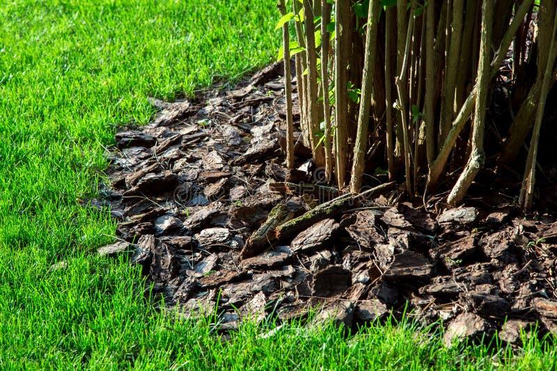 Προστατευτικό στρώμα με το φλοιό ενός δέντρου κάτω από έναν θάμνο στοκ εικόνα με δικαίωμα ελεύθερης χρήσης