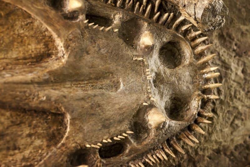 Προϊστορικός δεινόσαυρος Fossile στοκ εικόνες με δικαίωμα ελεύθερης χρήσης