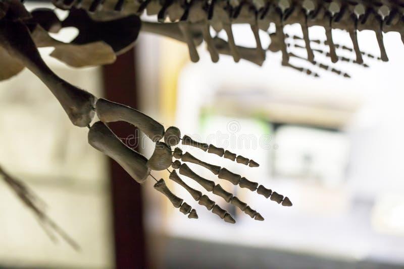 Προϊστορικός δεινόσαυρος Fossile στοκ εικόνα