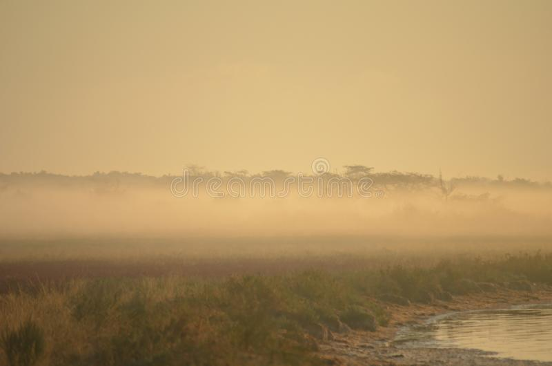 Πρωί μετά από μια βροχή νύχτας στην όχθη ποταμού στοκ εικόνες με δικαίωμα ελεύθερης χρήσης