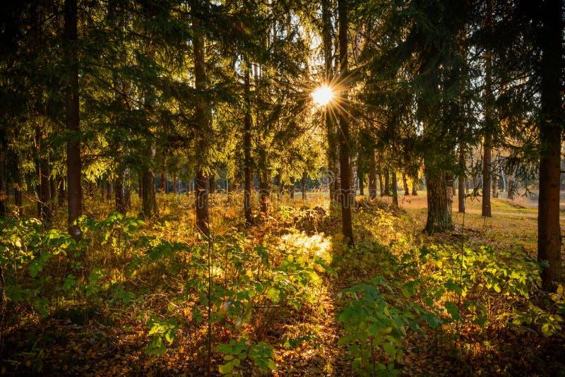 Πρωί στο δάσος στοκ εικόνες