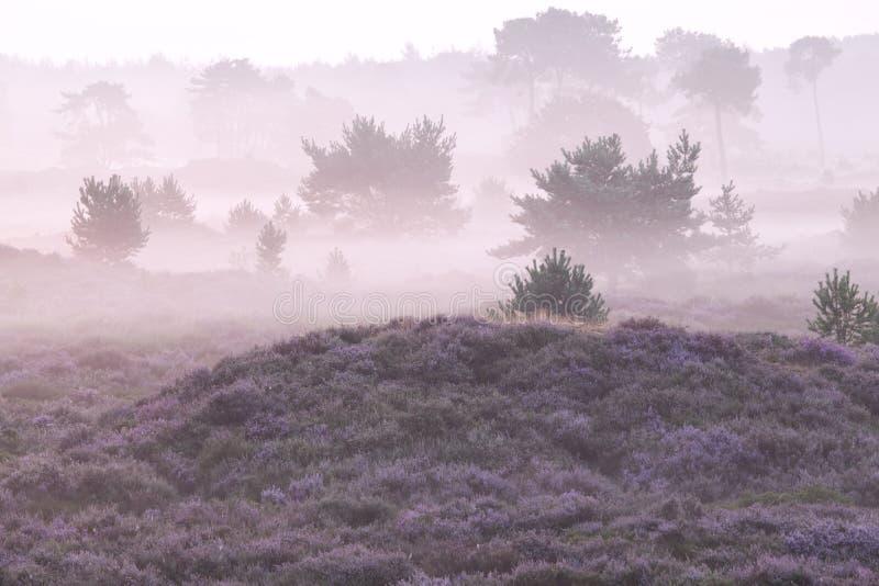 Πρωί της Misty πέρα από τους λόφους με την ερείκη στοκ εικόνες
