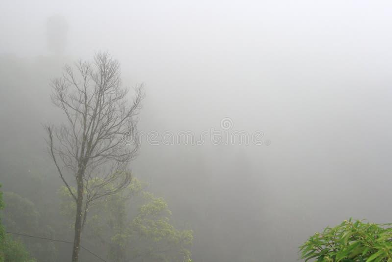 Πρωί της Misty στοκ εικόνες με δικαίωμα ελεύθερης χρήσης