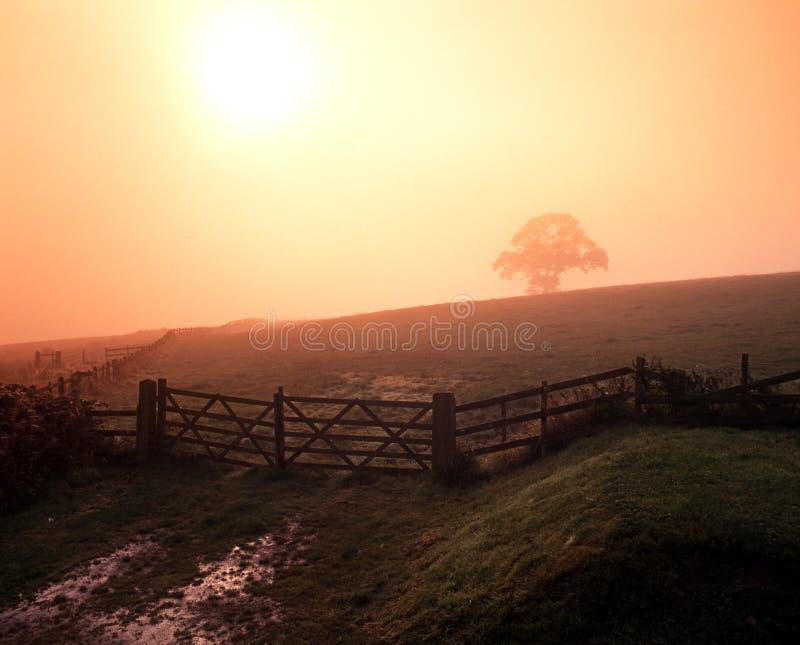 Πρωί της Misty, Staffordshire, Αγγλία. στοκ εικόνα