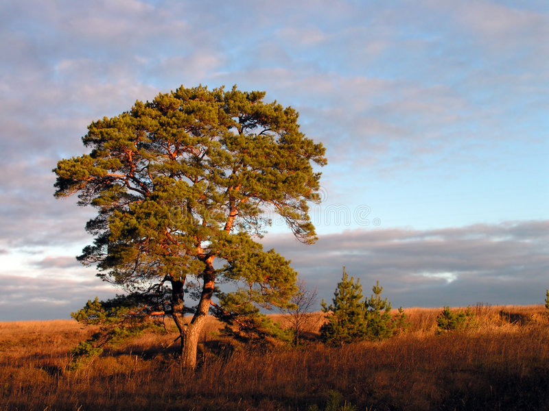 πρωί φθινοπώρου στοκ εικόνα με δικαίωμα ελεύθερης χρήσης