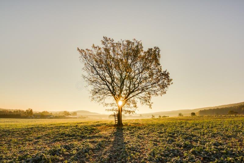 Πρωί φθινοπώρου στοκ εικόνες με δικαίωμα ελεύθερης χρήσης