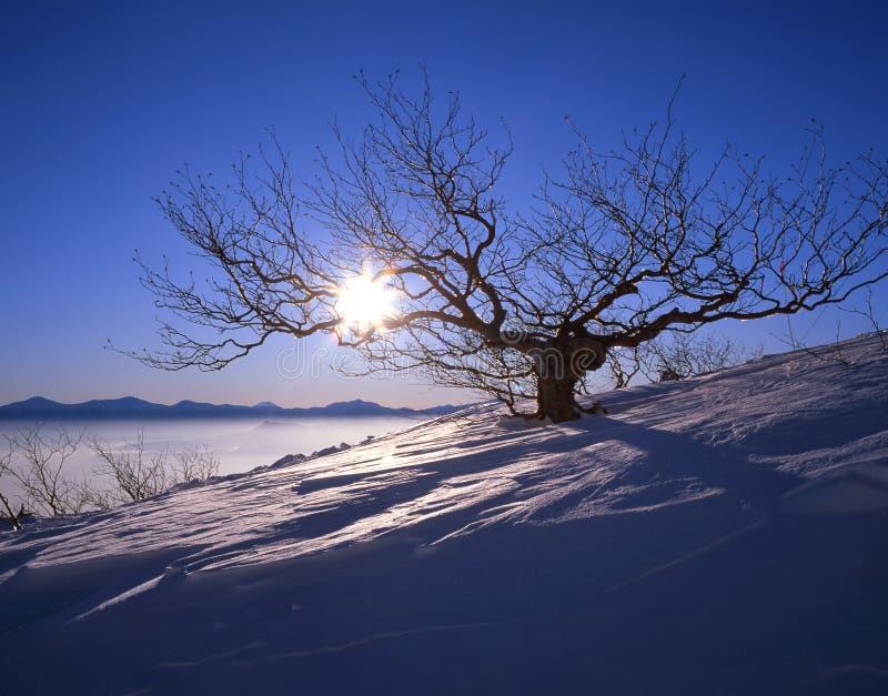 πρωί mountaintop στοκ εικόνα