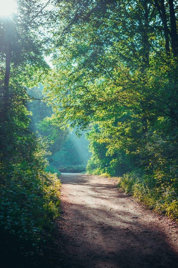 Πρωινός ήλιος στο δάσος πράσινο φυλλοβόλο στέμμα και χωματόδρομος στοκ εικόνες με δικαίωμα ελεύθερης χρήσης