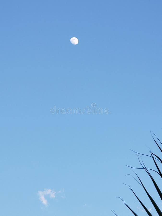 Πρωινό φεγγάρι στοκ φωτογραφίες με δικαίωμα ελεύθερης χρήσης