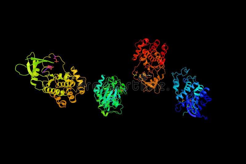 Πρωτεϊνική κινάση 7, ένα ένζυμο κυτταροδιαίρεσης που διαμορφώνει trimeric στοκ φωτογραφίες με δικαίωμα ελεύθερης χρήσης