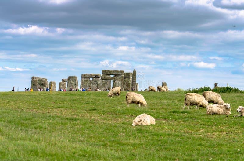 Πρόβατα κατά τη βοσκή σε Stonehenge στην πεδιάδα του Σαλίσμπερυ στοκ εικόνες