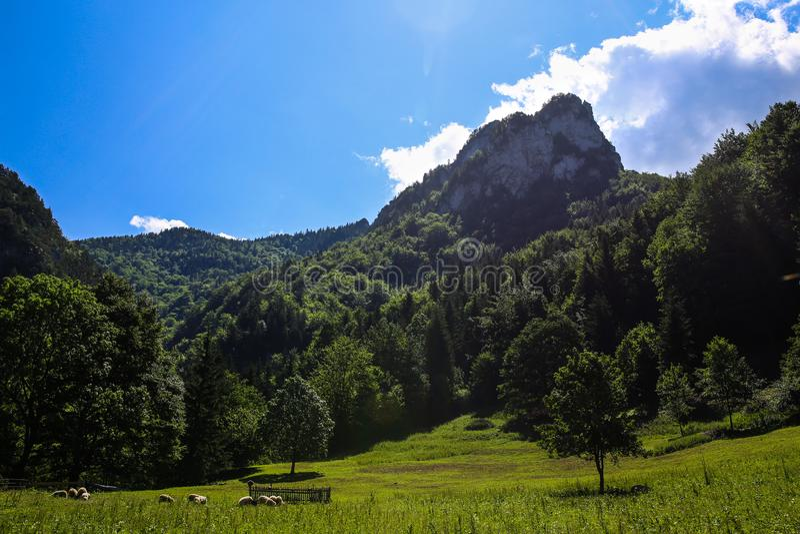 Πρόβατα πτυχών κάτω από το λόφο Rozsutec στοκ εικόνα με δικαίωμα ελεύθερης χρήσης