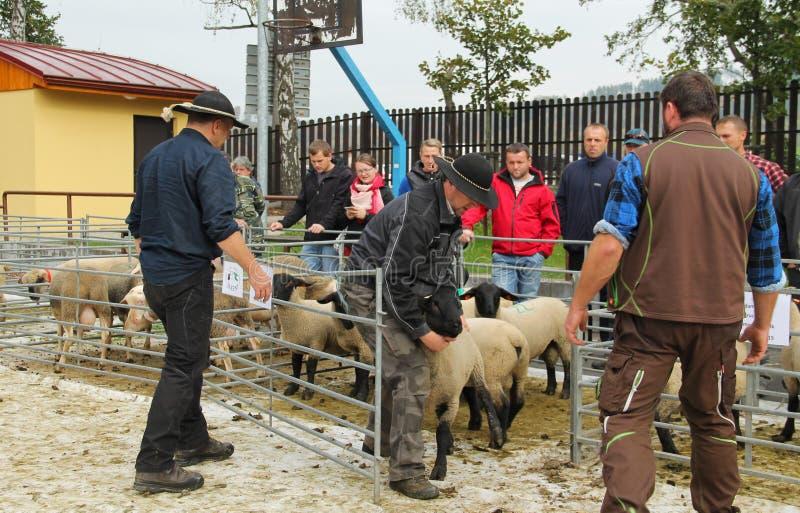 Πρόβατα στην έκθεση στοκ εικόνα