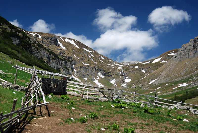 πρόβατα της Ρουμανίας πτυ&c στοκ εικόνα με δικαίωμα ελεύθερης χρήσης