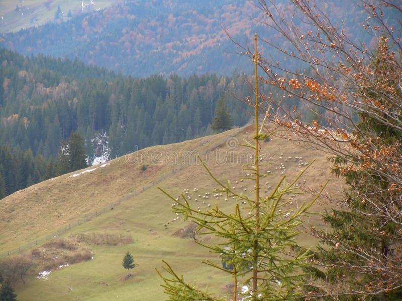 Πρόβατα mountainside στοκ φωτογραφία με δικαίωμα ελεύθερης χρήσης