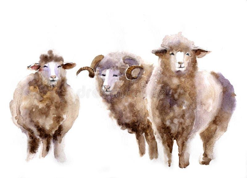Πρόβατα Watercolor στοκ φωτογραφία με δικαίωμα ελεύθερης χρήσης