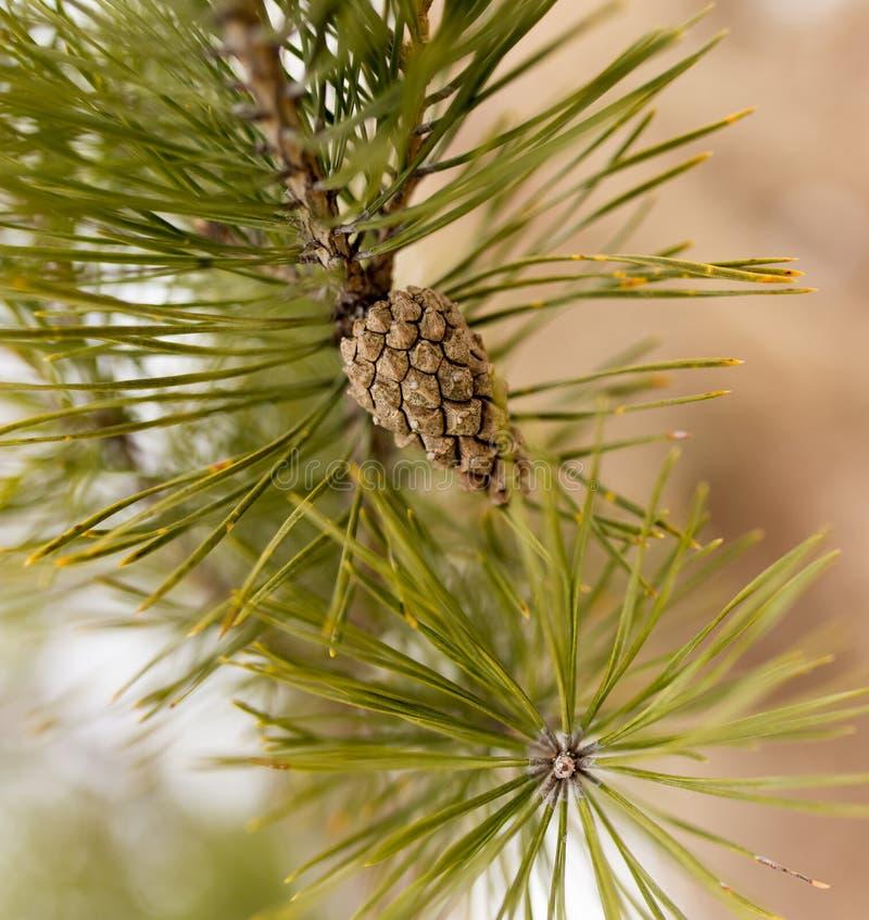 Πρόσκρουση στο δέντρο στη φύση στοκ φωτογραφία με δικαίωμα ελεύθερης χρήσης