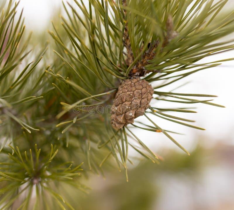 Πρόσκρουση στο δέντρο στη φύση στοκ εικόνες με δικαίωμα ελεύθερης χρήσης