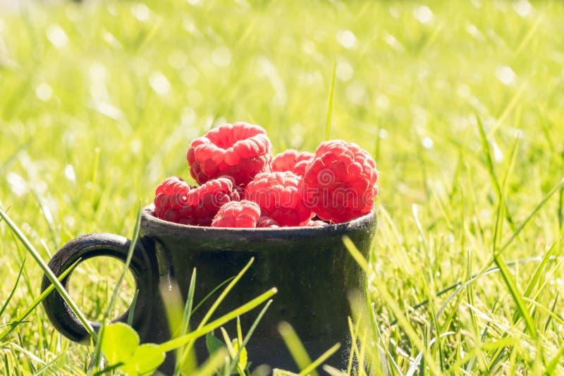 Πρόσφατα επιλεγμένο σμέουρο και θερινός ηλιόλουστος κήπος στοκ εικόνες με δικαίωμα ελεύθερης χρήσης