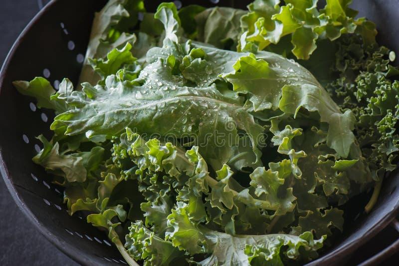 Πρόσφατα πλυμένα φύλλα κατσαρού λάχανου σε ένα τρυπητό στοκ φωτογραφία