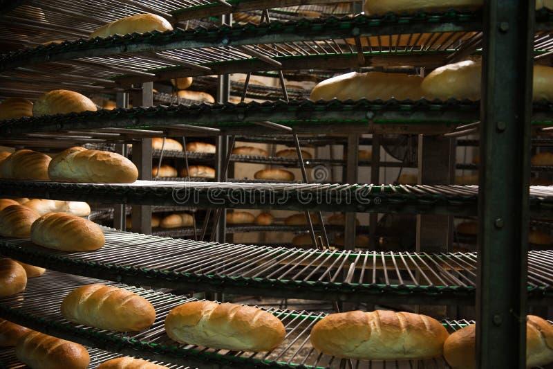 Πρόσφατα ψημένες καυτές φραντζόλες ψωμιού στη γραμμή παραγωγής στοκ φωτογραφία με δικαίωμα ελεύθερης χρήσης