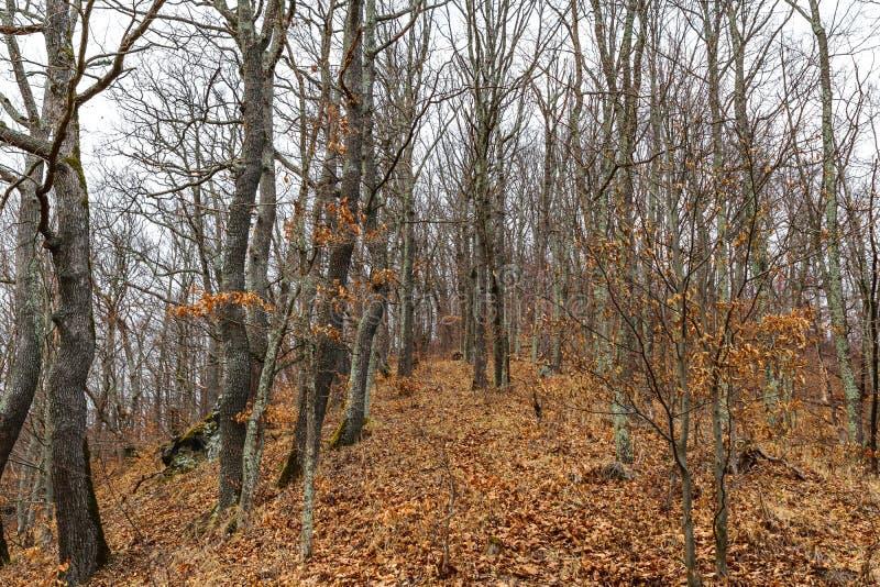 Πρόσφατη χειμερινή κενή δασική, όμορφη ζωηρόχρωμη άδεια και κενά δέντρα στοκ εικόνα