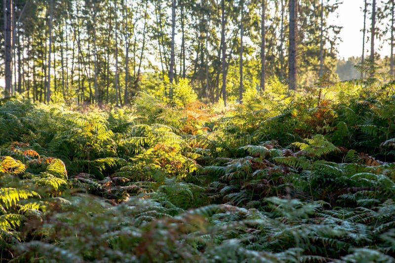 Πρόσφατο καλοκαίρι στο Waldlewitz ΙΙ στοκ φωτογραφίες