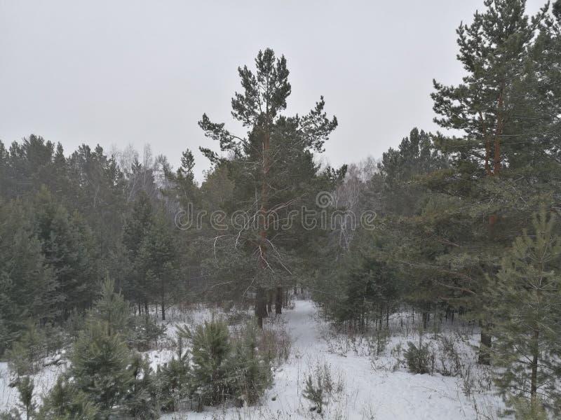Πρόσφατο φθινόπωρο της Σιβηρίας Αναρρίχηση των χιονωδών βουνών στοκ φωτογραφία