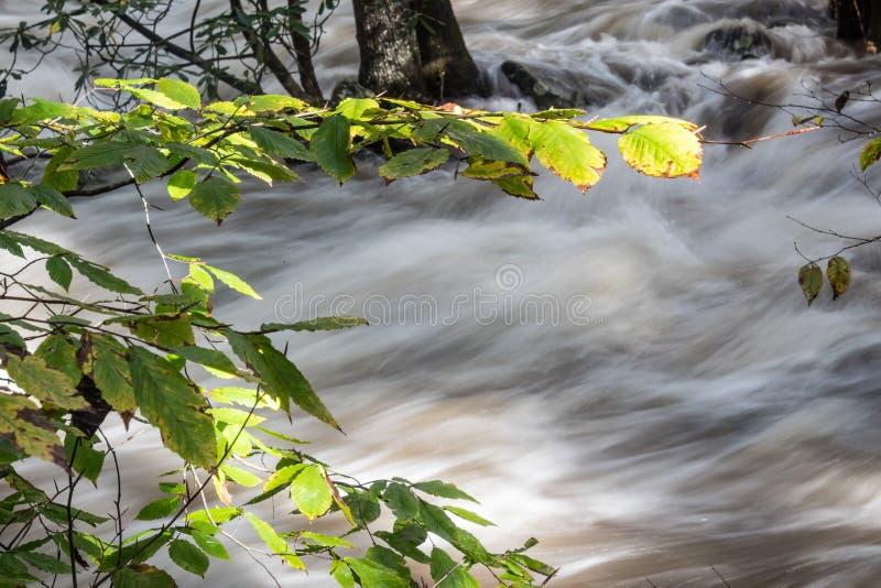 Πρόσφατο φως του ήλιου ημέρας που πιάνει τα φύλλα ως βιασύνη νερών πλημμύρας κοντά στοκ φωτογραφίες