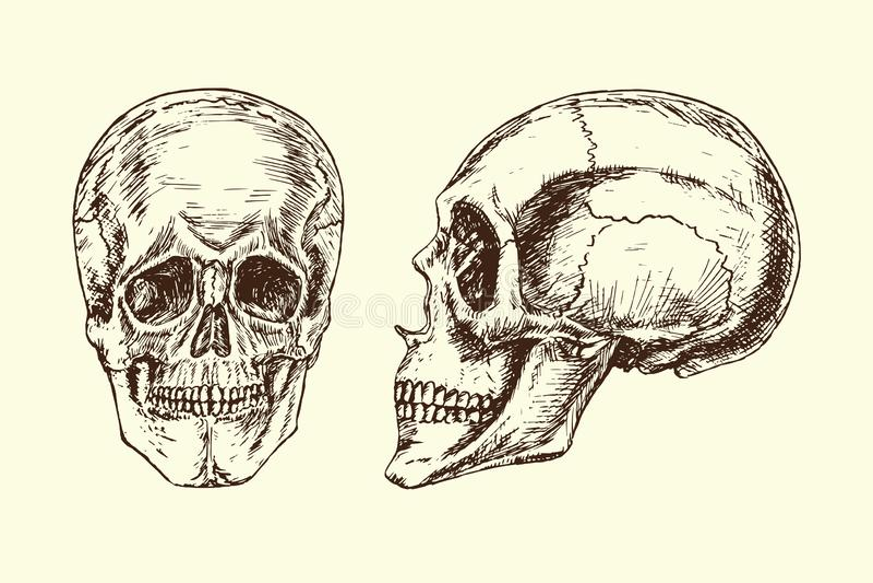 Πρόσωπο κρανίων και σχεδιάγραμμα, χέρι που σύρεται doodle, σκίτσο στο ύφος ξυλογραφιών, διανυσματική απεικόνιση διανυσματική απεικόνιση